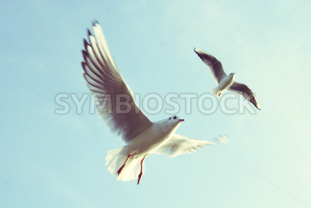 Birds Flying Against the Blue Sky – Symbiostock Express Demo