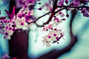 Pink Blossoms on a Branch - Symbiostock Express Demo