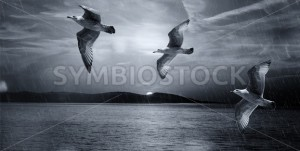 Seagulls Flying Illustration - Symbiostock Express Demo